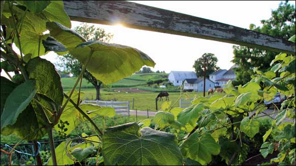 Wineries in Lancaster PA